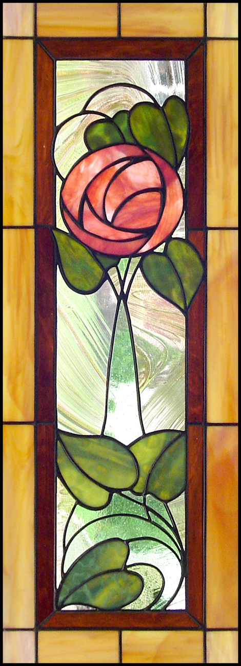 MacIntosh rose